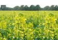 Logo NRW will Bioenergie-Politik neu ausrichten