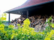 Holz und Raps als Tr&auml;ger von Bioenergie, &copy; IWR