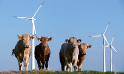 Konzeption und Strukturierung geschlossener Fonds aller Art (Wind, Solar, Biomasse, Wasser)