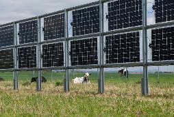 Landwirtschaft und solare Stromproduktion vereinen? Das innovative Next2Sun Gestellsystem machts möglich